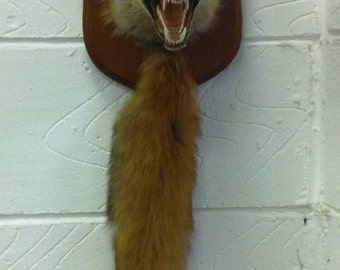 Alan, Fox mask with brush taxidermy