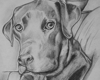 A4 drawing/portrait of your pet