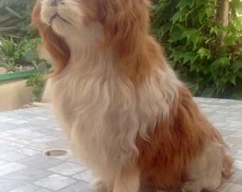Faux dog taxidermy
