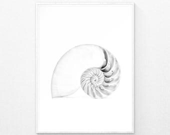 Coastal Print, Seashell Art, Coastal Wall Art, Beach Decor, Beach Wall Art, Beach Print, Nautical Wall Decor, Nautical Print, Printable Art