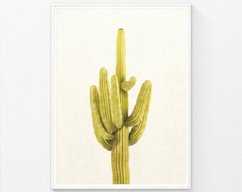 Cactus Photography, Gold Yellow Decor, Cacti, Cactus Decor, Arizona, Cactus Print, Cactus Art, Instant Download, Print Wall Art Decor