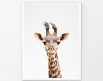 Giraffe Print, Animal Photography, safari animal prints, nursery decor, Giraffe Wall Art, Nursery Wall Art, Printable Art, kids room decor