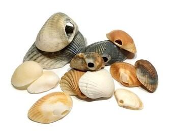 20 Natural Hole Shells -Hand Collected, craft shells, jewelry supplies, beach decor, bulk shells, shells with holes, beach crafts, terrarium