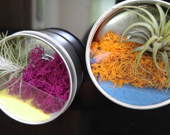 Magnetic Air Plant Terrarium