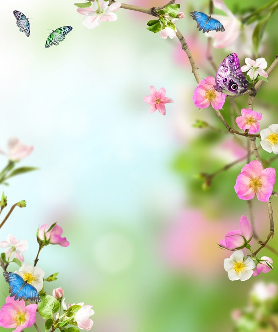 Spring Backdrop Pink Flowers And Butterfly Valentine