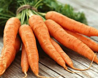Carrot Danvers 126 Organic HEIRLOOM Seeds Large pack