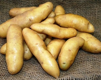 1 lb Banana Fingerling SEED POTATOES