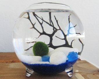 marimo moss ball terrarium