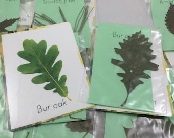 Leaf identification kit, pressed sample leaves, tree identification kit, montessori teaching material, Tree study material, fall leaf study