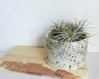 ceramic planter -  small succulent  planter  - black and white ceramic planter - ceramic planter - succulent pot - blue raven pottery