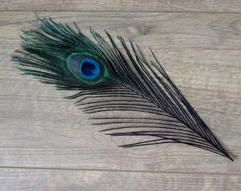 Black Peacock Feathers (Colour Wash)
