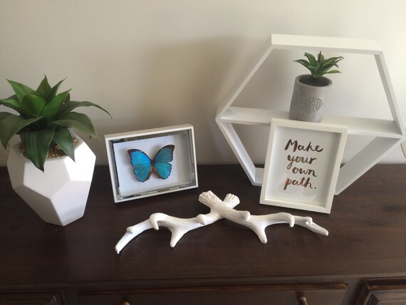 Rare real butterfly - Morpho Menelaus in white mirror shadow box frame