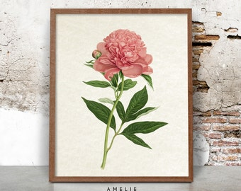 Botanical Flower Print, French Farmhouse Decor, Country Cottage Wall Art, Shabby Chic, Pink Flower, Printable Art, Instant Digital Download