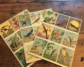 Vintage Colorful Bird Art on Hard Cardboard (A659)