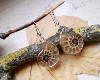 Ammonite fossil, earrings, earrings, silver plated hooks