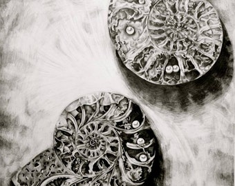 Graphite Pencil Seashell Drawing