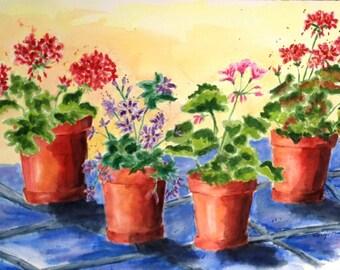 Four Geraniums