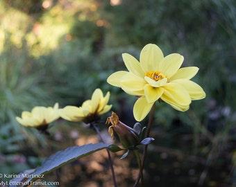 Flower Photo Yellow
