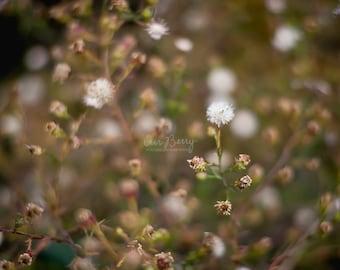 Fall weeds - Nature Photography Print