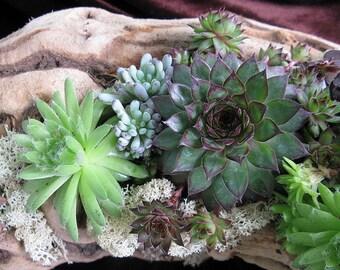 DIY - Wooded succulent garden