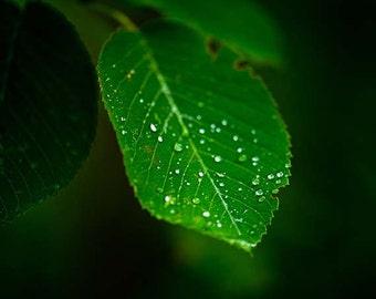 Raindrops Leaf Print