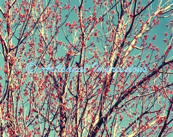 Tree and sky, Blue sky and tree branches, blue photo decor, red and blue photo, nature photography, blue and red photo, spring tree, nature