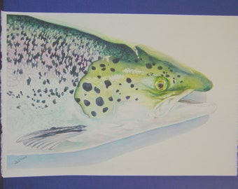 "Unframed Original Watercolor Painting of a Fish (18.5"" x 14"")"