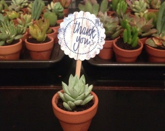 100 Thank you signs for wedding favor plants
