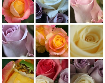 Rose Collage Fine Art Photography
