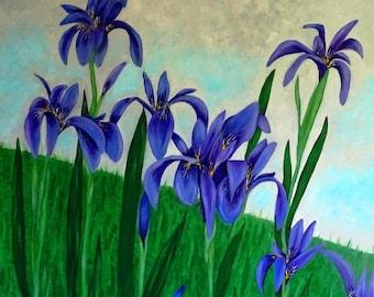 Wild Iris acrylic on deep edge canvas 23 x 23, large art, wall art