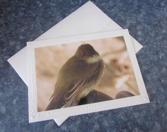 Handmade Note Card with Eastern Phoebe Photo