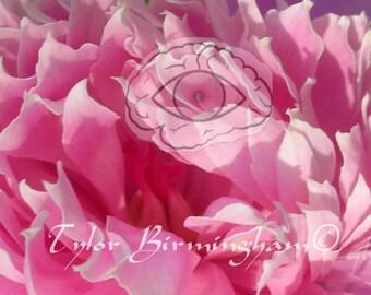 Peony Pink Flower Nature Fine Art Macro Photography FREE Domestic SHIPPING