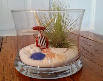 Beach side with Andreana Air Plant