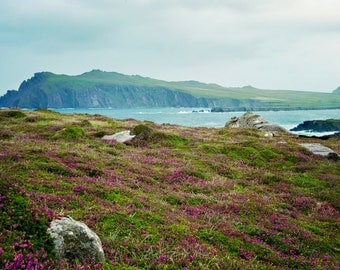 Irish, Ocean, Coast, Purple flowers, Photography, Ireland Photography,