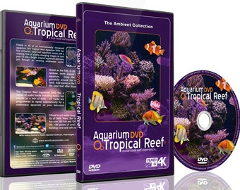 Tropical Reef Aquarium - Filmed in 4K