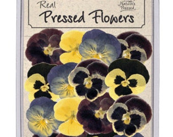 Pressed, dried Small Pansies - 16 piece pack