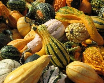 Autumn Squash Photographic Print