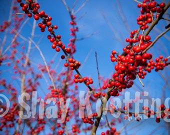 RED - Art Print - Wall art - Nature Photography