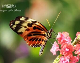 Butterfly 16-2