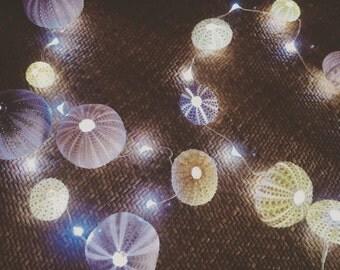 Sea urchin twinkle lights