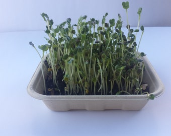 Organic Sprout Seed Kit