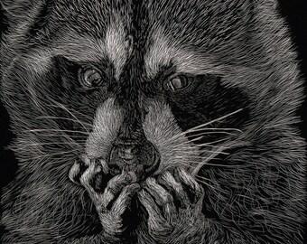 Raccoon Scratchboard