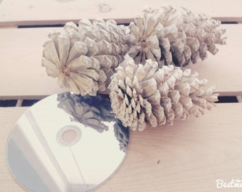 3 Real Pine Cones, Bleached