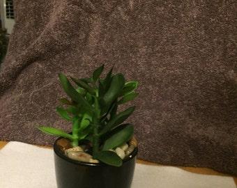 Small round black ceramic potted cactus #319