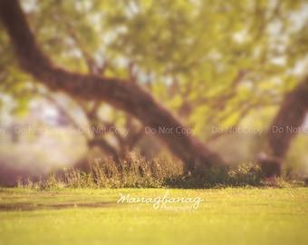 Summer Dream Digital Backdrop