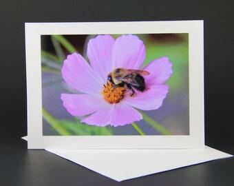 Miss bee, flower, summer