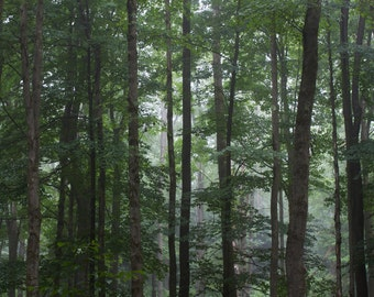 Forest Trees, nature photography, wall art