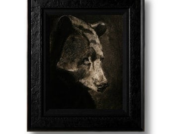 Bear Charcoal Drawing 8.5x11 Print
