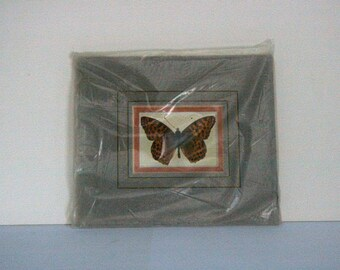 """Butterfly """"Queen of Spain Fritillary"""" - Mounted print"""