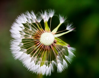 Nature photography - make a wish